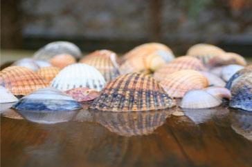 seashells-contact-page
